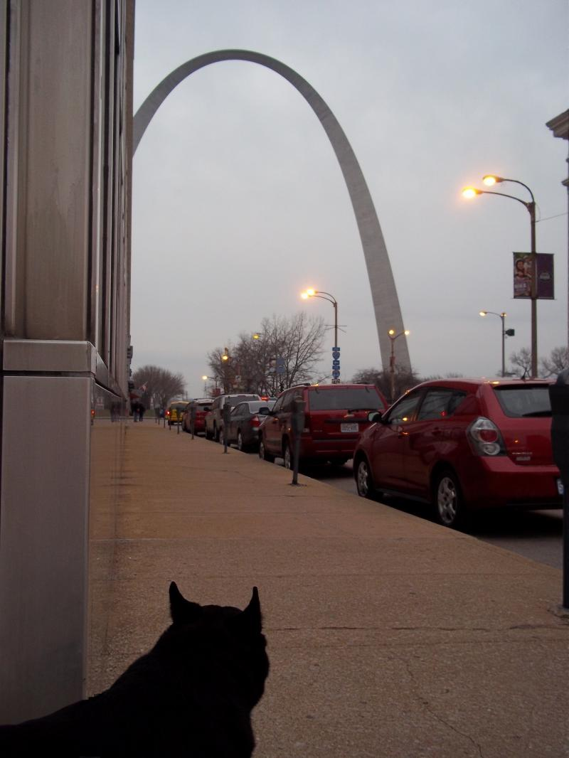 oscar in st louis - arch and parabola